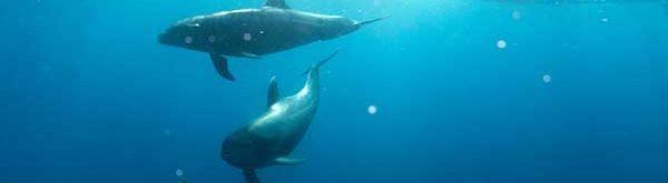 Delfins tukisuhde-img